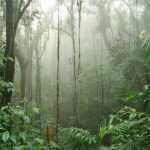 Quepos – Monteverde