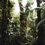 Monteverde NP